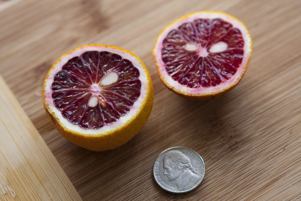 Ripen dropped Moro blood orange, 2015.