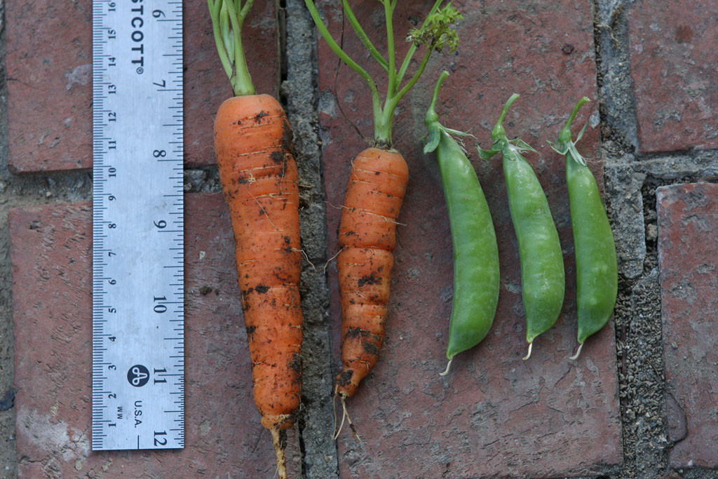 Peas and carrots.